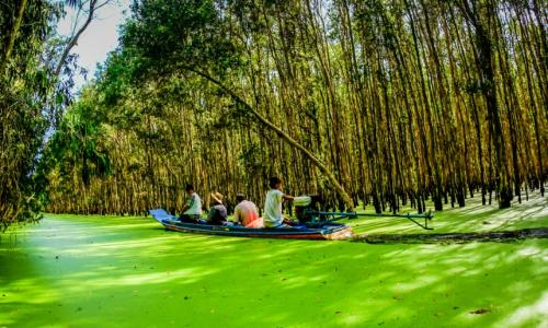 Hệ sinh thái trong lành của Rừng tràm Trà Sư
